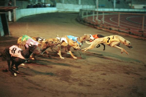 "Celebrities write to Macau chief executive, calling for closure of ""cruelest greyhound track"""
