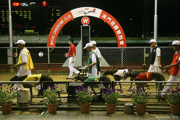 Macau government grants dog track 1-year extension