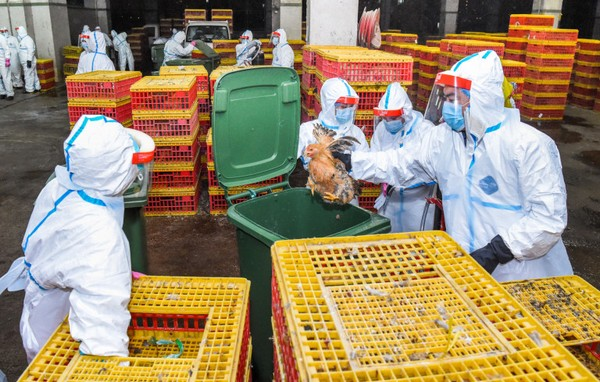 Macau Government stops live poultry sales for 3 days over bird flu scare