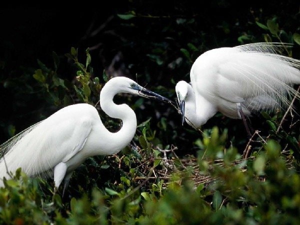 Eco-activists and residents urge Macau government to protect egrets´habitat