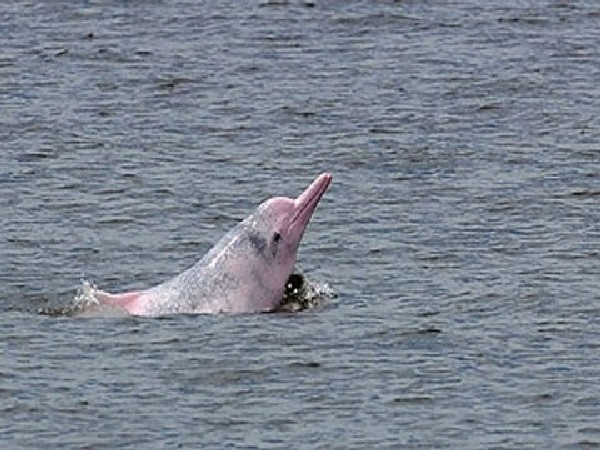 Dead dolphin mother, newborn calf found washed ashore
