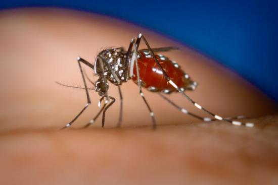 Macau logs year's first imported case of dengue fever