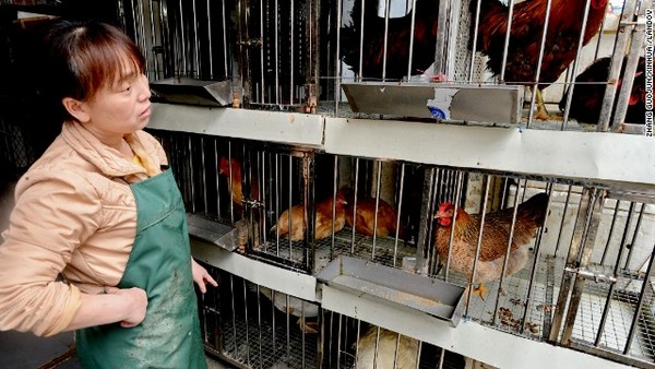 Residents unfazed by Hong Kong's culling of chickens