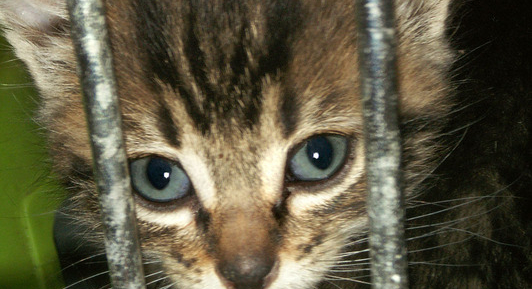 Animal protection bill heading for another delay