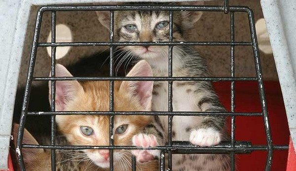 Govt lowers proposed jail to 1 year for animal abuse in Macau