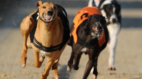Anima organizes round table discussions to protect greyhounds in Macau