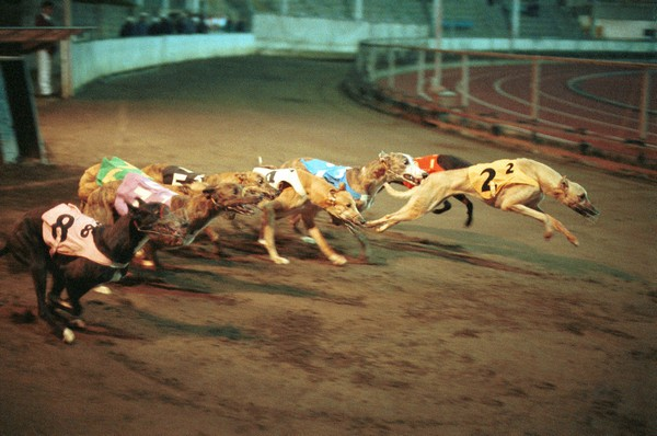 "Celebrities write to Macau chief executive, calling for closure of ""cruelest greyhound track"""