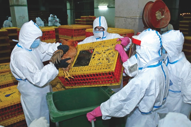 8,000 chickens culled as bird flu found in Iao Hon market, Macau