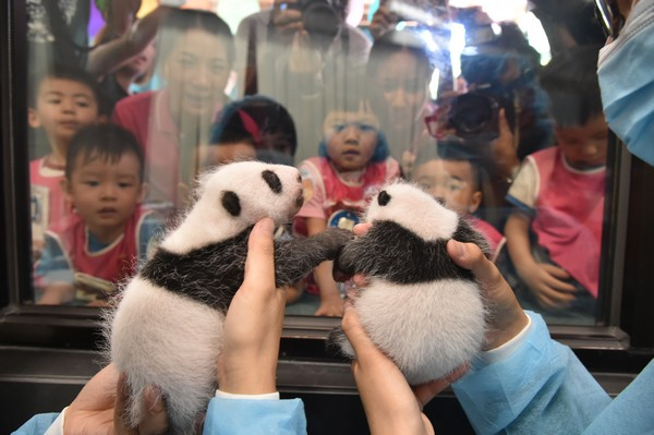 Panda twins to be named by Macau residents