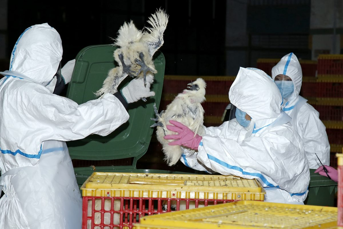 Wife of city's 1st human bird flu victim in Macau tests negative