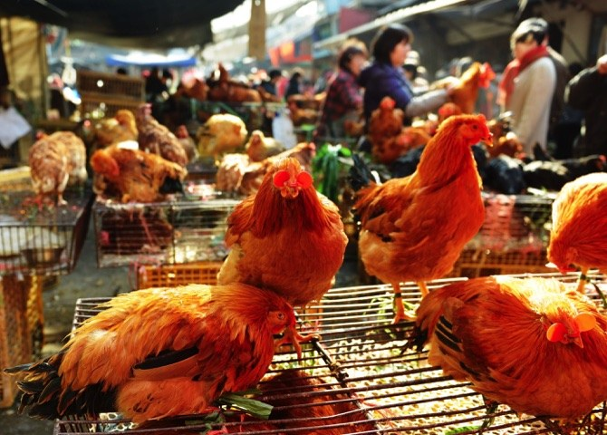 Government bans live poultry sales from today