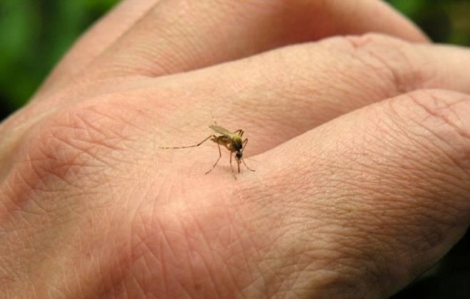 Local dengue cases rise to three