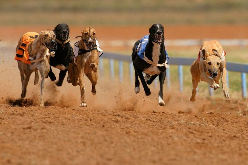 Angela Leong says racetrack will 'properly handle' its dogs