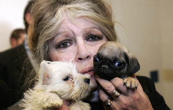 Brigitte Bardot urges CE to 'save' greyhounds