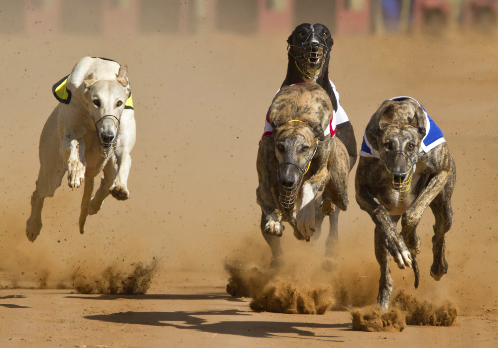 Angela Leong says she can take all greyhounds