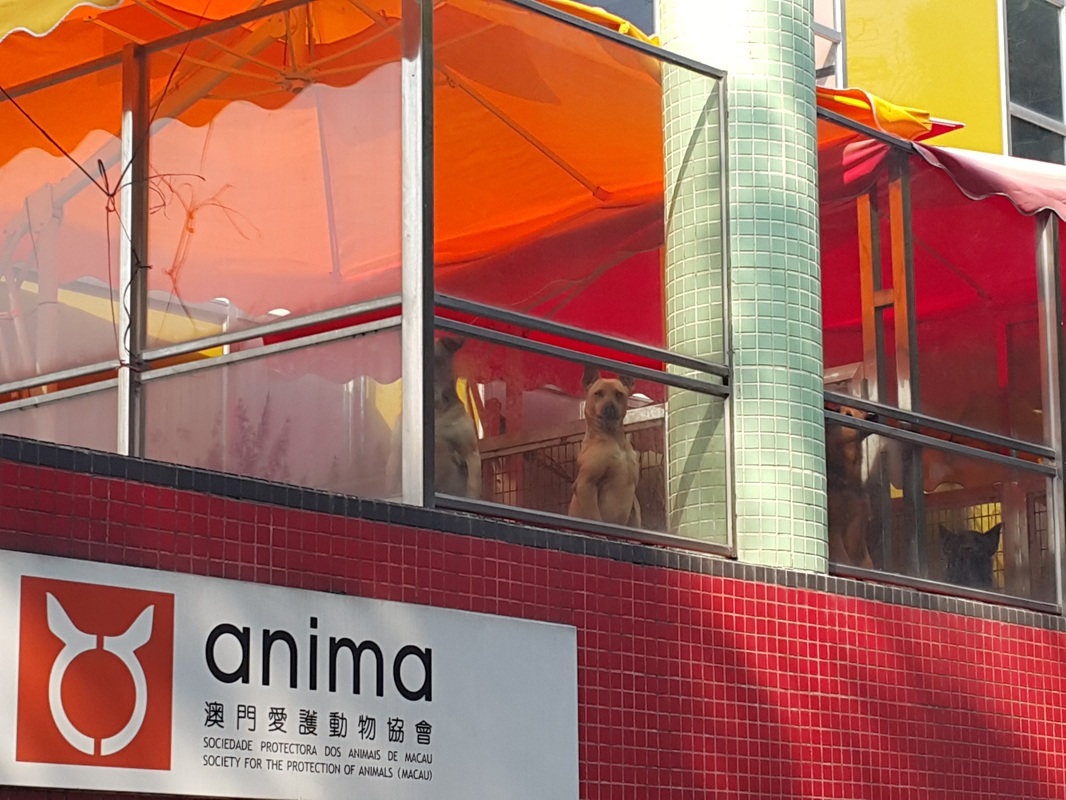 Anima may close in 6 weeks due to insufficient funds