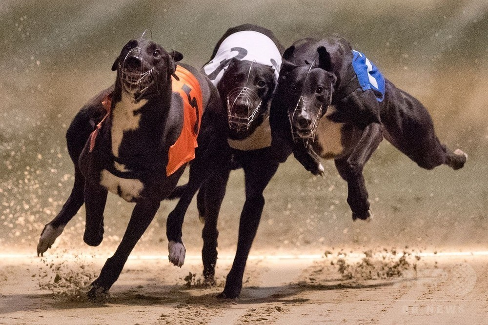 'Not easy' to get all dogs adopted: racetrack operator