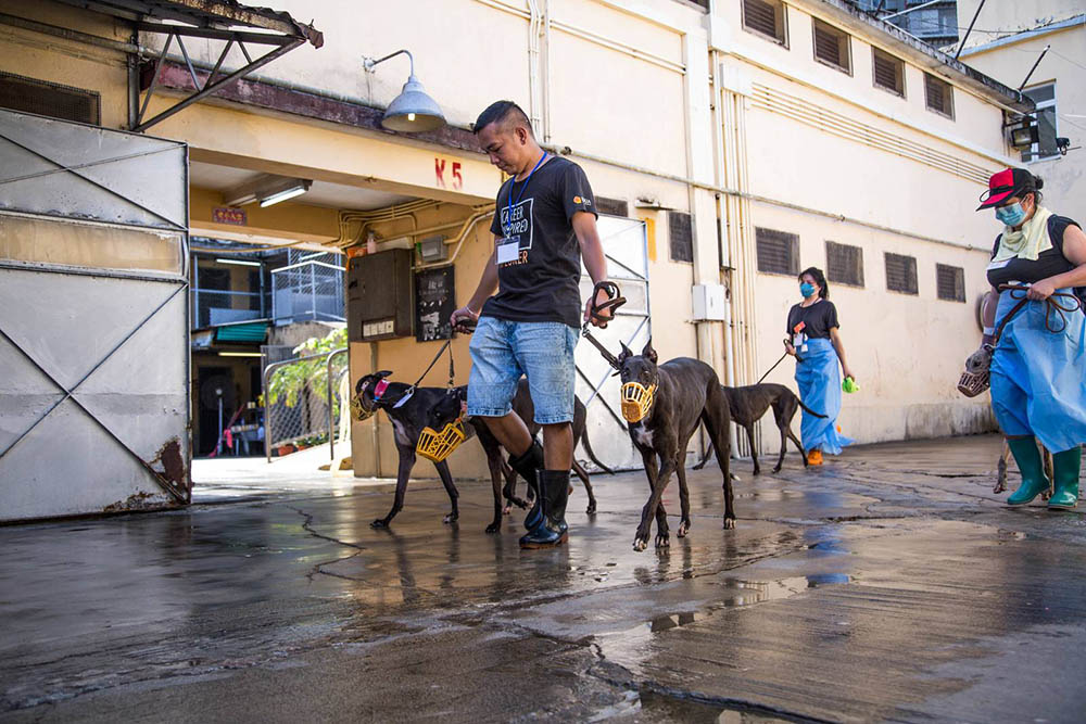 Greyhounds may be airlifted to US, Europe: Anima