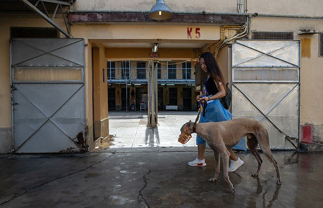 Macau greyhounds' kennel conditions are improving: IACM