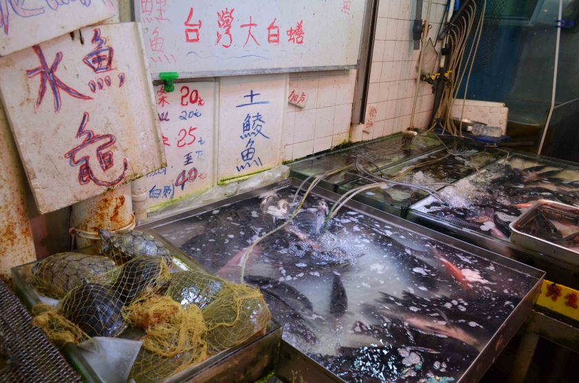 Microbiologist from HKU suggested wet markets in Hong Kong should go cashless