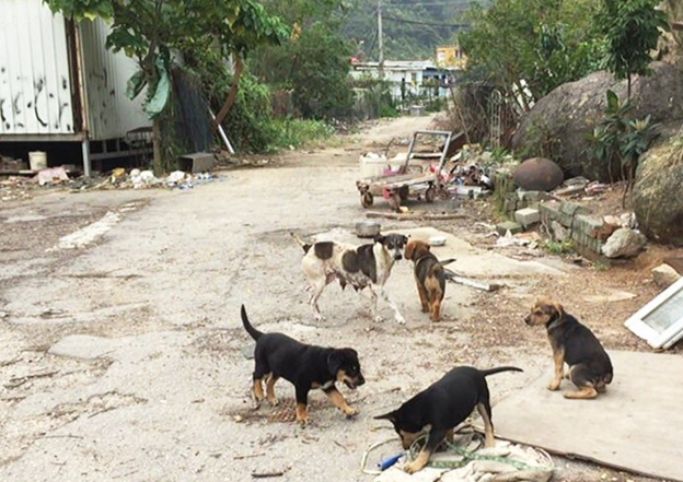 TNR the only way to help reduce strays in Macao according to ANIMA