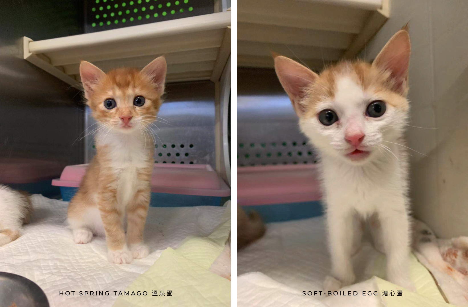 Adoption Tails: Egg Brothers