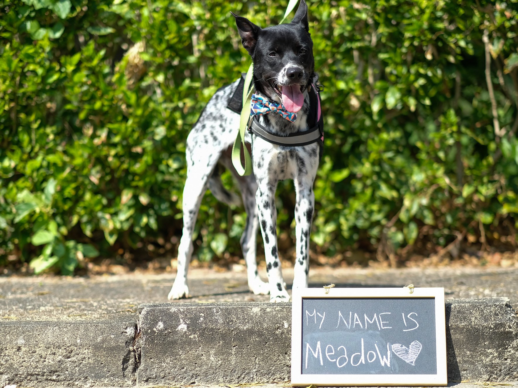 Adoption Tails: Meadow