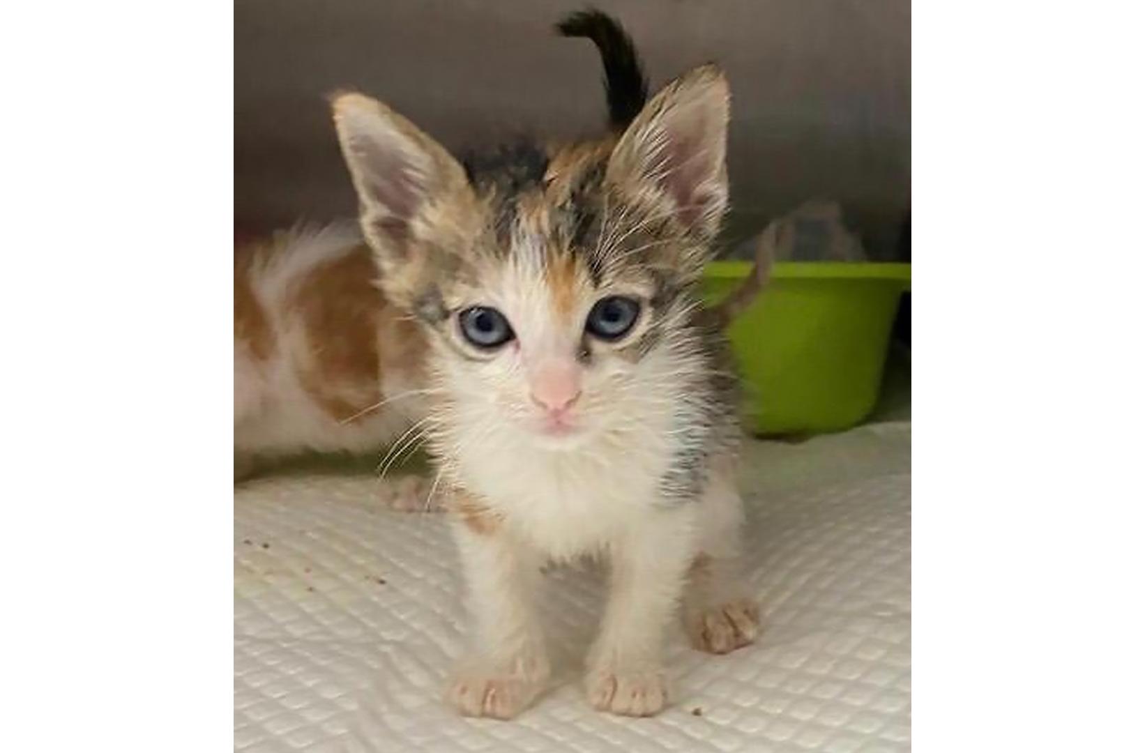 Adoption Tails: BB-Ye
