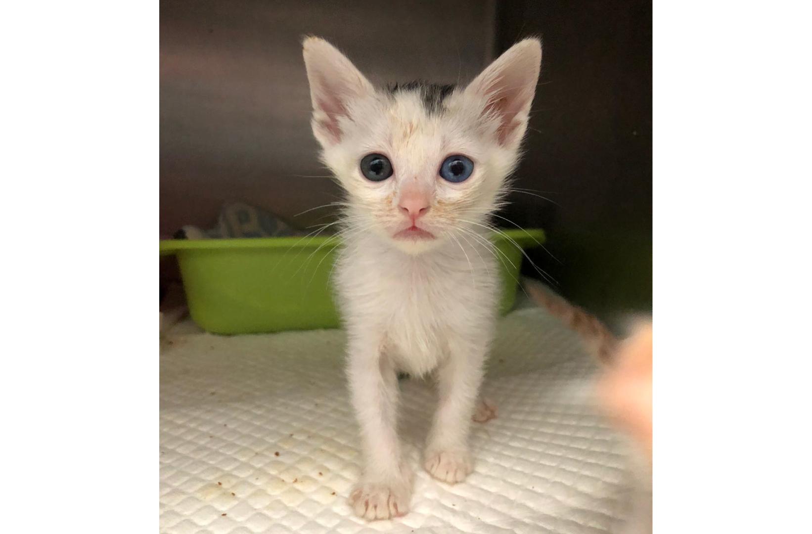 Adoption Tails: BB Yi