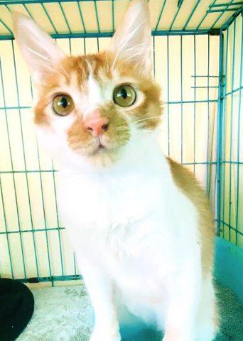 Adoption Tails: Keith