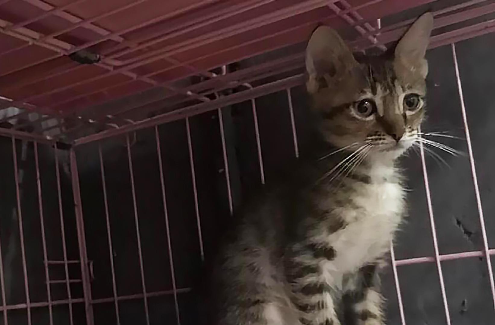 Adoption Tails: Kent