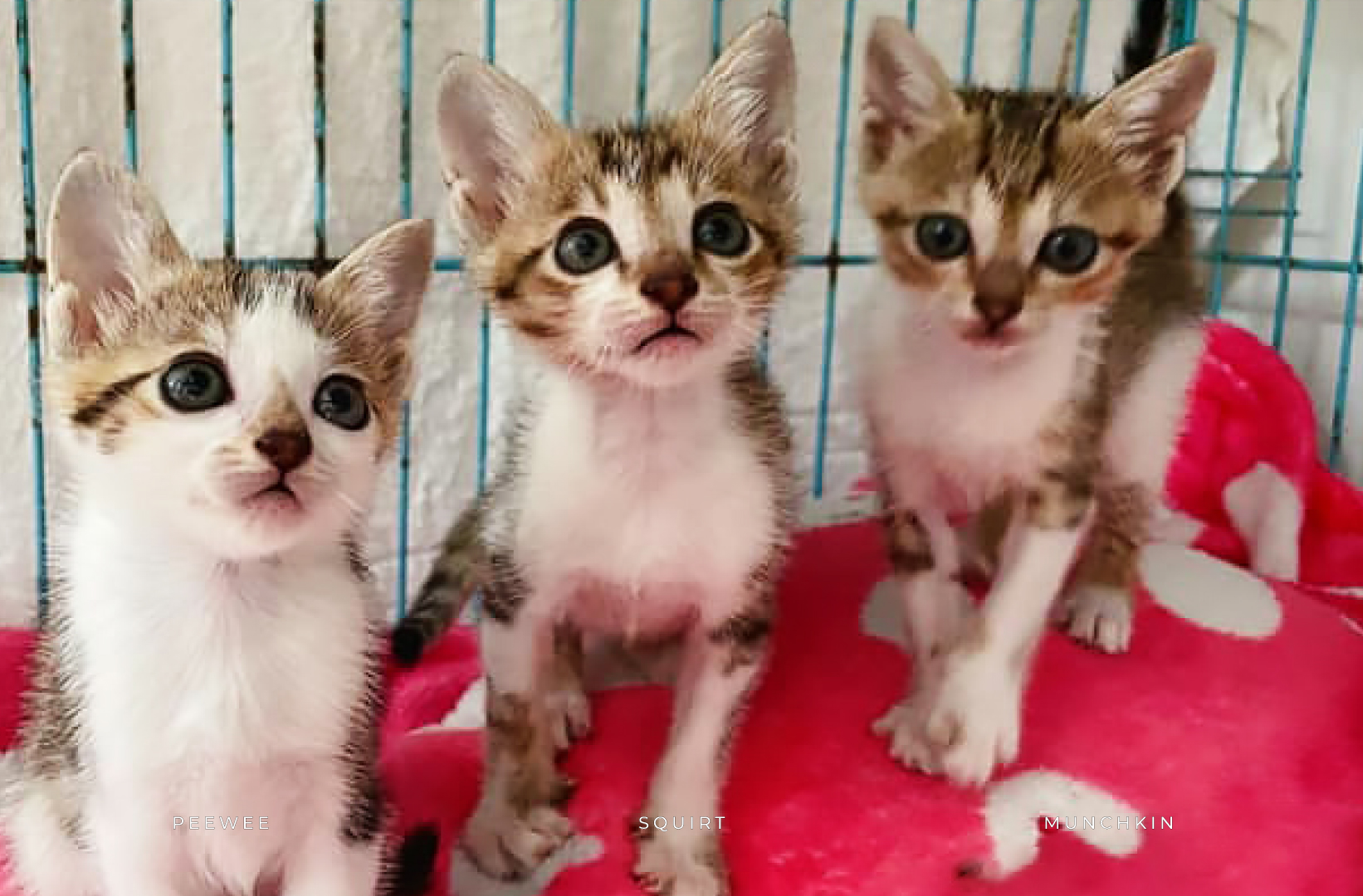 Adoption Tails: Peewee, Squirt and Munchkin