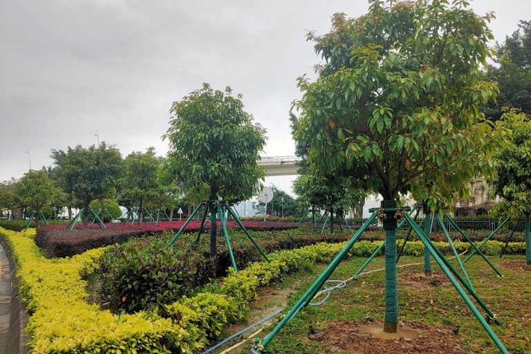 Macau trees