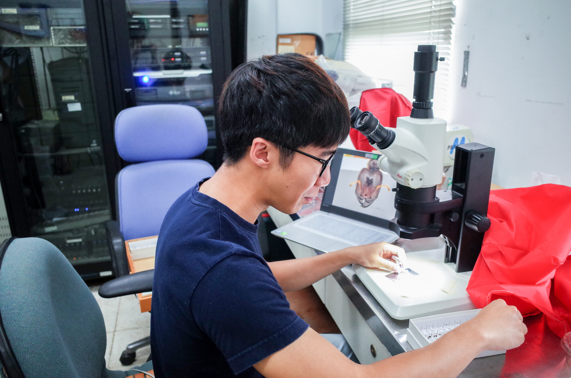 Danny Leong studying an ant sample